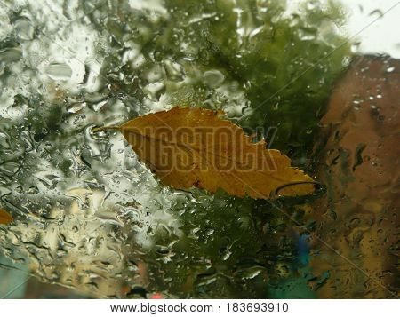 Autumn leaves and waterdrops glass on window glass close-up