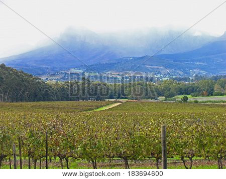 LANDSCAPE WITH A FIELD OF GRAPE VINES IN THE FORE GROUND AND MOUNTAINS AND CLOUDS IN THE BACK GROUND