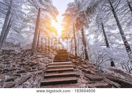 Winter stairway view in Huangshan National park. China.