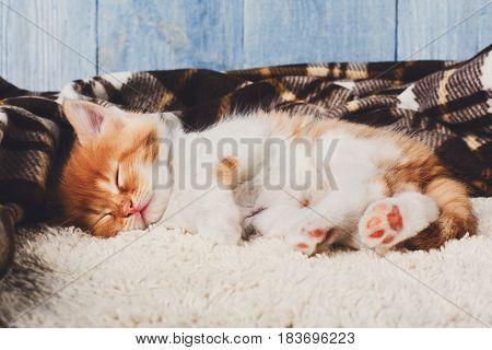 Sleeping kitten. Cute ginger small cat relax on plaid blanket