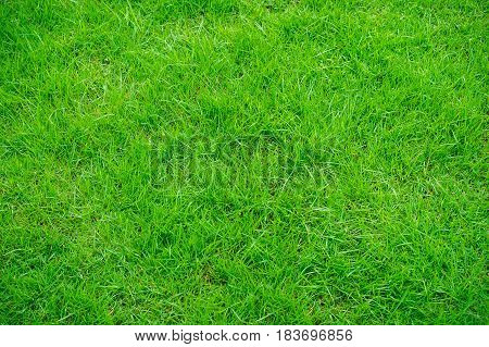 The lawn floor is well maintained and maintained. Green lawn for the background.