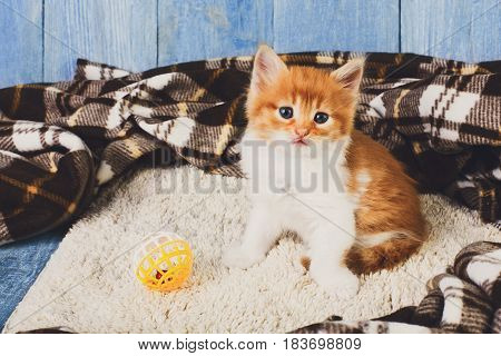 Ginger kitten with white chest. Small cat with toy ball near plaid blanket