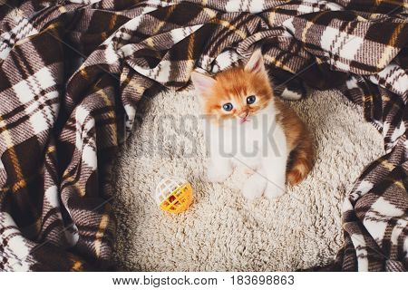 Ginger fluffy kitten with white chest. Small cat with toy ball at plaid blanket