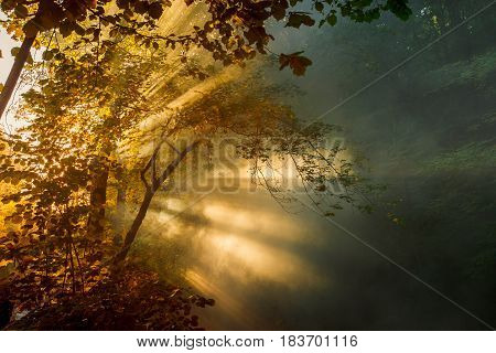 Bright sunbeams make their way through the morning mist and the foliage of trees. Picturesque landscape. Gelendzhik Russia
