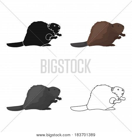Canadian beaver. Canada single icon in cartoon style vector symbol stock illustration .