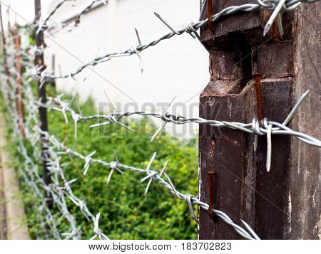 barbed wire whit bright green ornamental plants