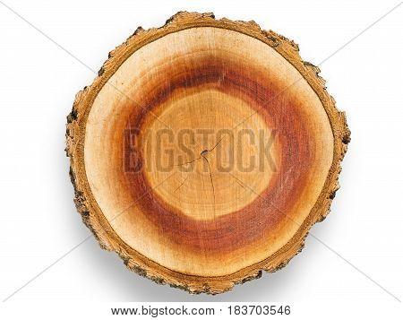 Apricot Tree Woodcut