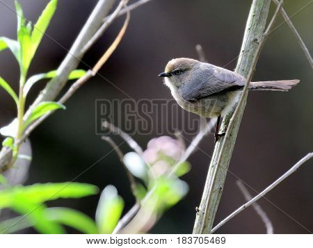 Bushtit perched on a branch with bright foliage