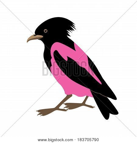 rose-colored starling vector illustration style Flat side