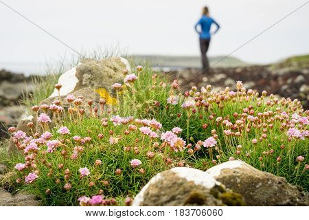 Purple flowers at a beach. A woman in background enjoys the view and relaxation.