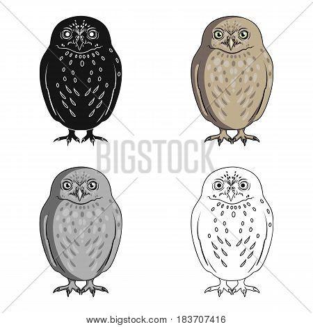 Owl.Animals single icon in cartoon style vector symbol stock illustration .
