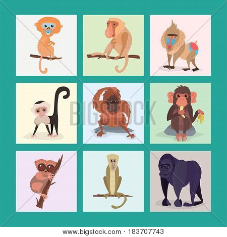 Different breads monkey cards character animal wild vector print set illustration. Macaque nature primate cartoon wild zoo cheerful gorilla ape chimpanzee wildlife jungle animal.