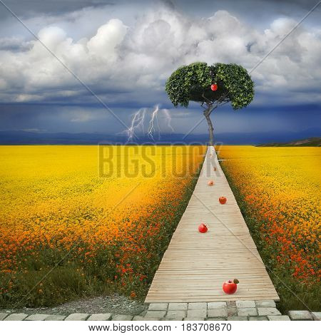 Biblical apple of temptation. To the apple tree there is a narrow path. In the background a thunderous beautiful sky.