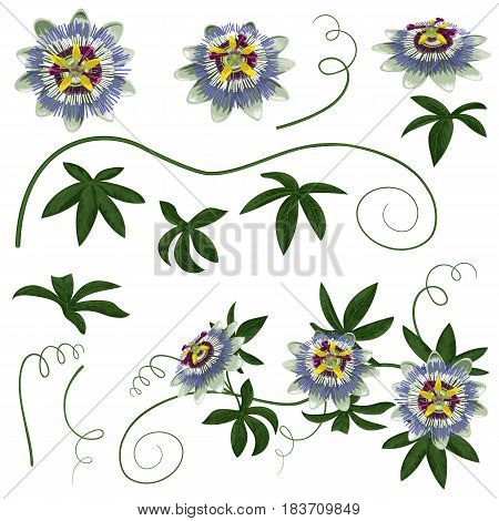 Passiflora exotic flowers and leaves set. Parts for preparation of floral compositions.