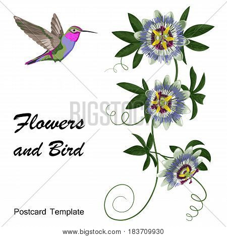 Hummingbird and passiflora. Template for postcards, greeting cards, wedding invitations. Vintage tropical floral composition.