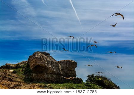 seagulls flying above a small rock formation