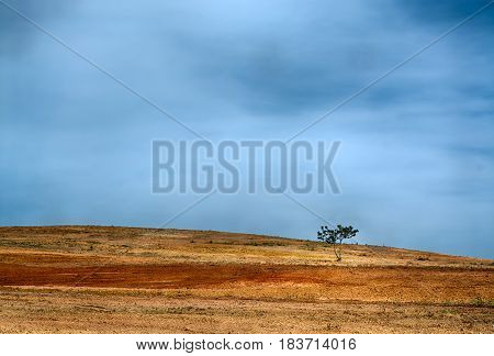 one pine tree alone in a field of brown reddish dirt against blue sky