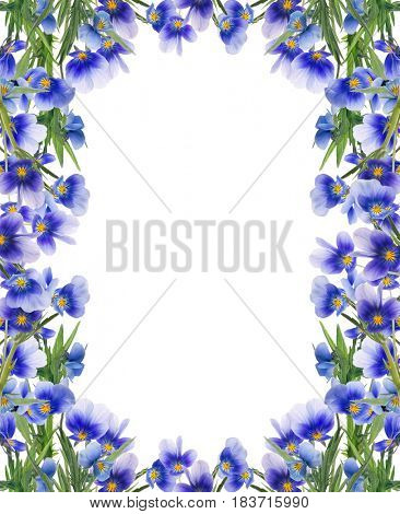 frame from pansy flowers isolated on white background