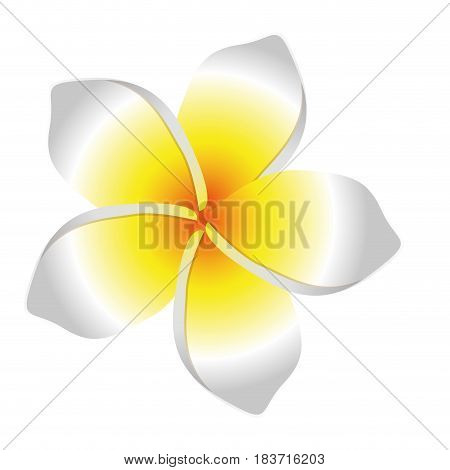 white background with realistic malva flower vector illustration