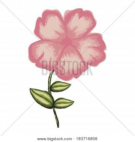 white background of watercolor malva flower in pink with stem and leaves vector illustration