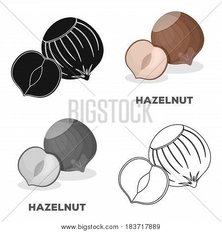 Hazelnuts in shell.Different kinds of nuts single icon in cartoon style vector symbol stock web illustration.