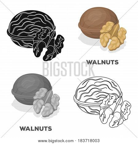 Walnats in the shell.Different kinds of nuts single icon in cartoon style vector symbol stock web illustration.