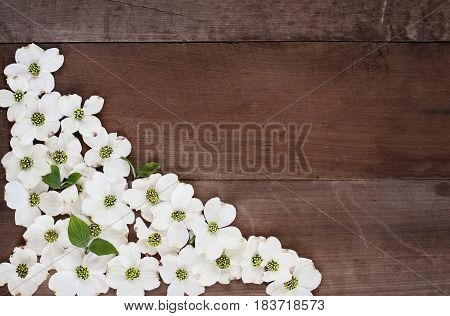 Close of flowering dogwood blossoms over a rustic wood table top background. Image shot from above with copy space.