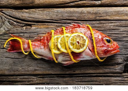 Red scorpionfish on a worn out wooden table