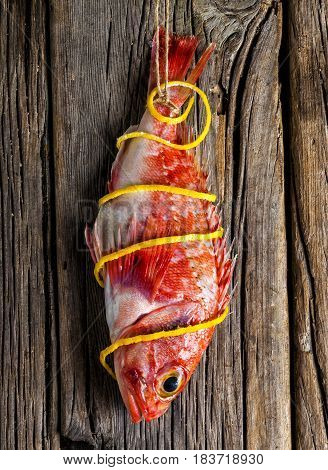 Red scorpionfish hanging on a wooden wall