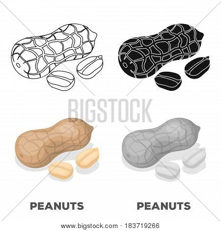 Peanut in the shell.Different kinds of nuts single icon in cartoon style vector symbol stock web illustration.
