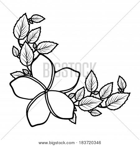 monochrome silhouette with malva flower with leaves vector illustration