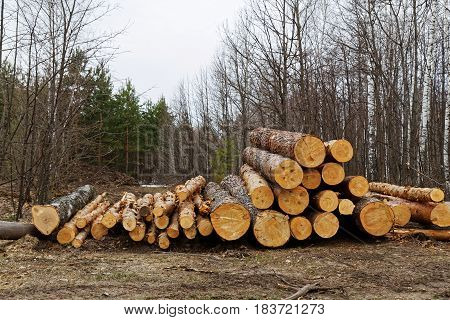 Pile Of Folded Logs Of Trees Lie On The Ground In The Forest.