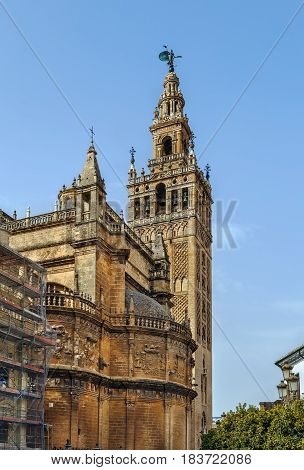 Seville Cathedral is a Roman Catholic cathedral in Seville Andalusia Spain. Bell tower.