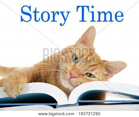 close up of one orange ginger tabby cat laying on a large book with one paw over the edge holding the pages looking directly at viewer. Face on book. Story Time text above
