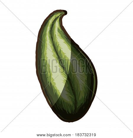 watercolor silhouette shading of green leaf with oval form vector illustration