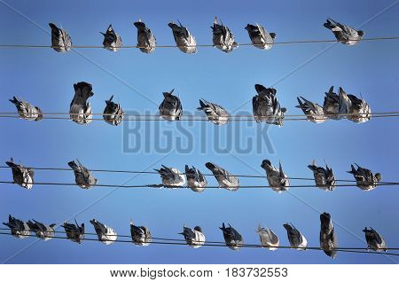 Doves are sitting on the wire, Random position