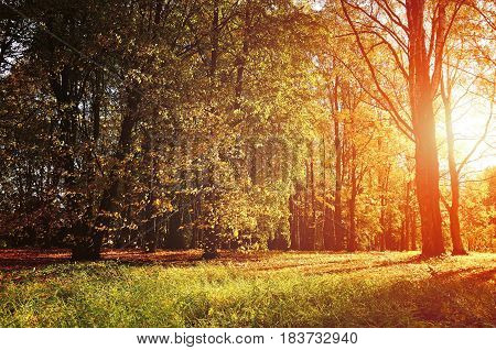 Autumn colorful landscape view of sunny autumn forest. Early autumn forest landscape lit by sunset light breaking through the tree branches. Autumn nature. Forest autumn landscape with yellowed autumn trees.