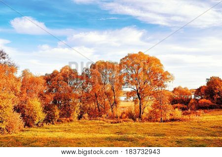 Sunset autumn view of autumn park lit by sinlight. Autumn nature landscape-yellowed autumn park in autumn sunny weather. Picturesque autumn landscape of autumn park. Autumn nature in sunlight
