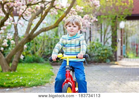 Adorable little kid boy driving and running on bike or laufrad in park or garden on warm spring day. Happy child having fun. Active leisure for kids outdoors on spring day. With flowering magnolia