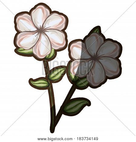 watercolor pair silhouette shading of single malva flower vector illustration