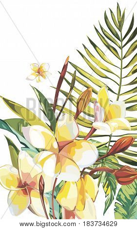 Banner, poster with palm leaves, jungle leaf and plumeria flowers. Beautiful vector floral tropical summer background.
