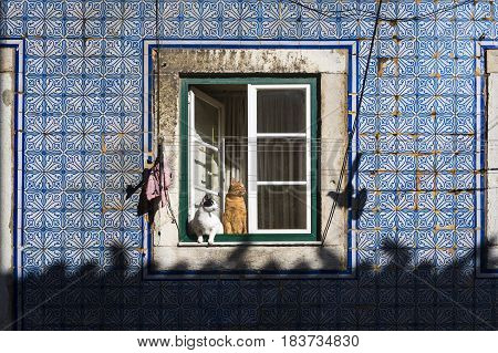 Two cats at a window in an old building in the traditional Bica neighborhood in Lisbon Portugal