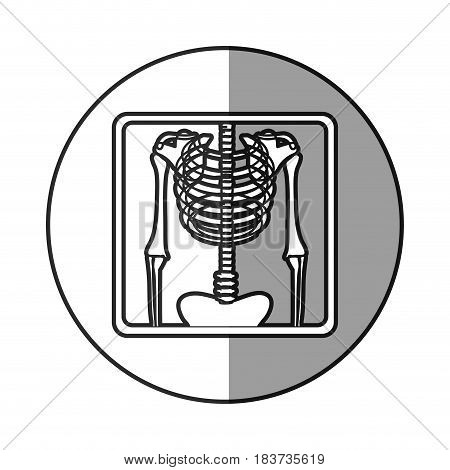 circular frame shading with pictogram skeleton bones radiography vector illustration
