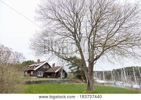 House And Big Tree