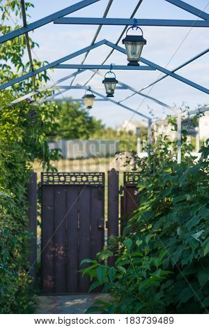 small courtyard of privat house with wrought-iron railings gates wicket grille for grapes and beautiful lanterns. green bushes