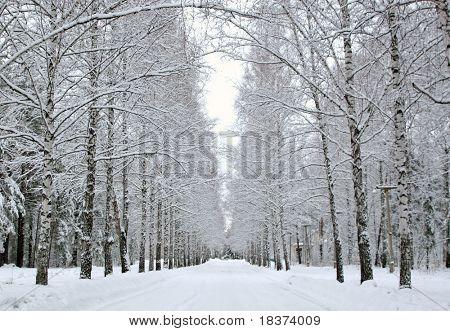 alley in winter