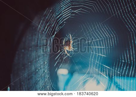 extreme close-up shot of spider web cobweb and flying in light rays particles of dust in sunlight. fly trap