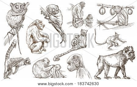 Animals - MONKEYS and APES - around the World. Collection of an hand drawn illustrations. Freehand sketches. Line art. Isolated on white.