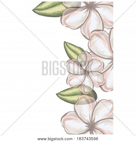 colorful floral background of white malva flowers in transparency vector illustration