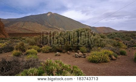Mountain landscape. Blue sky with clouds. Volcano Teide on Tenerife. Small desert bushes with yellow flowers and faded green leaves. Sand path.